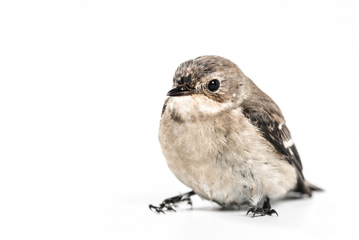 Tiny Birds A Poem by Aaron Blakeley