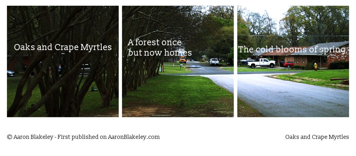 Oaks and Crape Myrtles Aaron Blakeley - Daily Haiku